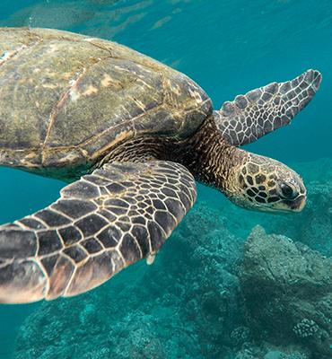 tortugas marinas en solaris