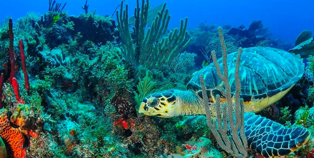 tortugas-en-el-mar-de-cancun-bajo-el-agua