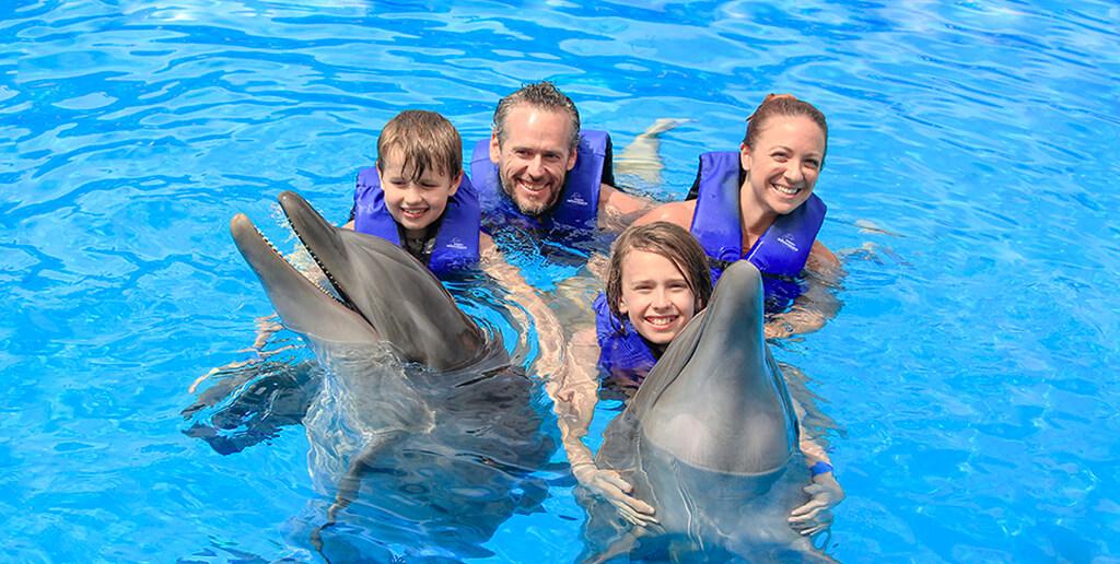 dolphins_in_los_cabos