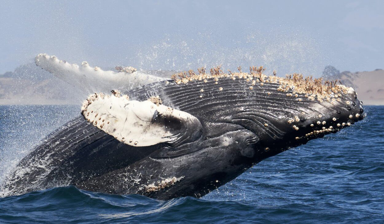 whale-watching-season-2020