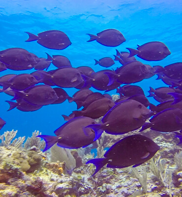 Vida Marina en el Mar de Cancún