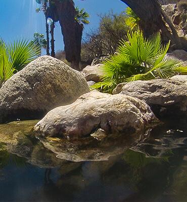El Oasis de Santiago en Los Cabos