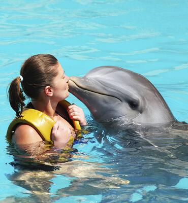 Actividades de Delfines en Los Cabos
