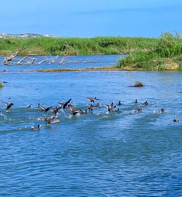 La Flora y Fauna del Estero de San Jose del Cabo