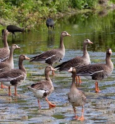 Las Aves en el Estero de San Jose del Cabo