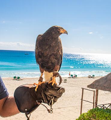 Halcones adiestrados en Cancún