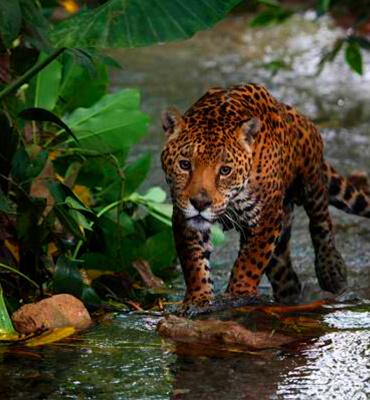 Fauna en la Reserva de Sian Kaan