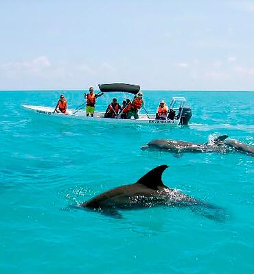 La vida marina en Punta Allen