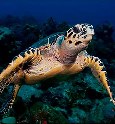 Tortugas Marinas en Cancún