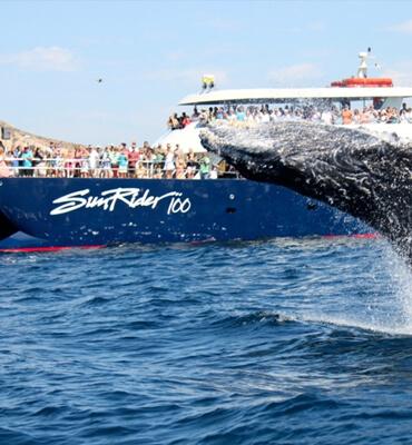 Sunset Rider Snorkeling Tour en Cabo San Lucas
