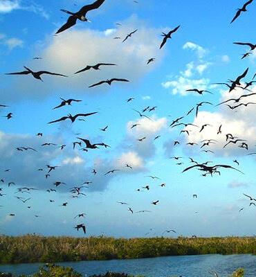 La Isla Contoy en Cancun