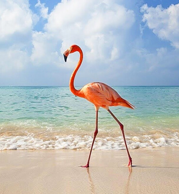 La Isla de Holbox en Cancun