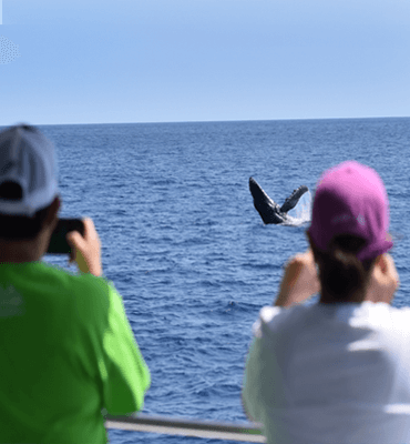 Taking Pictures of the Whales from Los Cabos