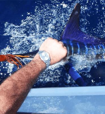 Torneo de Pesca Bisbee en Los Cabos atrapando un Marlin