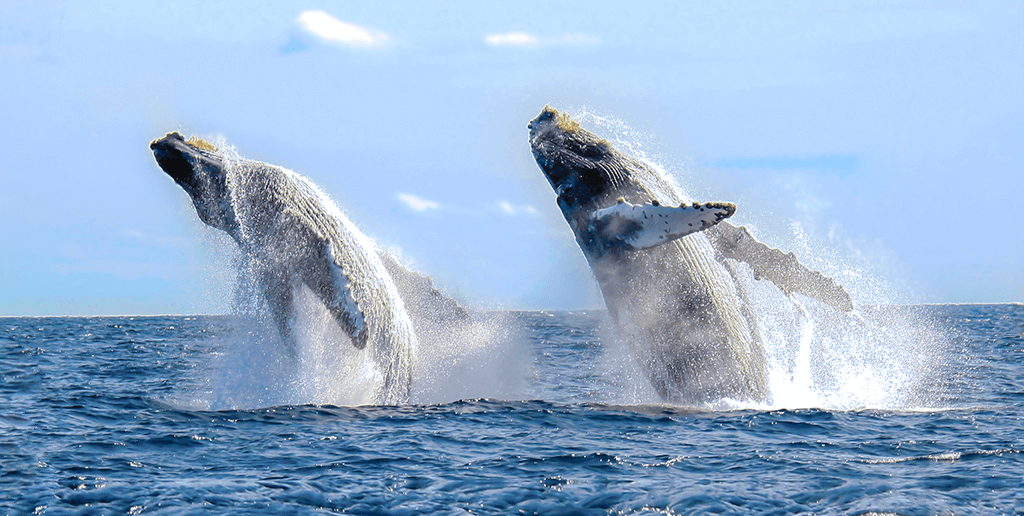 Whale Season In Los Cabos on 2018